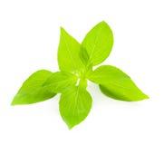 Fresh Basil / close-up on white background Stock Photography