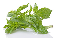 Fresh Basil Herb Royalty Free Stock Photos