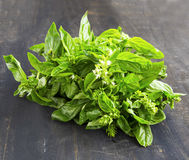 Fresh basil herb in a bunch on wooden dark board Royalty Free Stock Photography