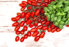 Fresh basil herb and cherry tomatoes. food background Royalty Free Stock Images