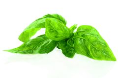 Fresh basil herb leaf closeup Stock Photography