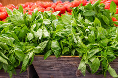 Fresh basil herb at the market Royalty Free Stock Photography