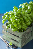 Fresh basil herb in rustic box Royalty Free Stock Photography