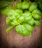 Fresh basil herb Stock Photography