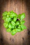Fresh basil herb Stock Image