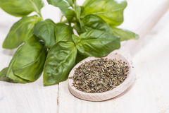 Fresh Basil Herbs Stock Photography