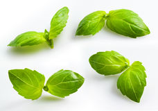 Fresh basil isolated on white Royalty Free Stock Photo