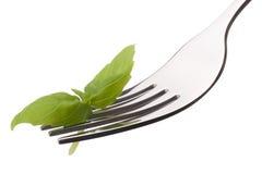 Fresh basil leaf  on fork isolated on white background cutout. H Stock Photo