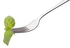 Fresh basil leaf  on fork isolated on white background cutout. H Royalty Free Stock Photo