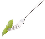 Fresh basil leaf  on fork isolated on white background cutout. H Stock Photo