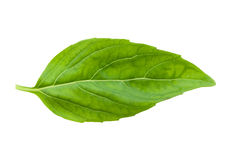 Fresh basil leaf isolated Stock Photography