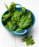 Fresh Basil Leafs Royalty Free Stock Photography