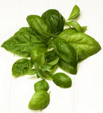 Fresh Basil Leafs Stock Photos