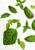 Fresh Basil Leafs Royalty Free Stock Images