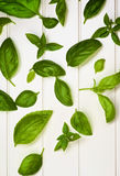 Fresh Basil Leafs Stock Images