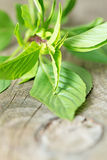 Fresh basil leafs on wooden table vertical Royalty Free Stock Image