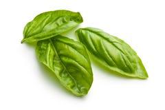 Fresh basil leaves Stock Photos