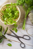 Fresh basil leaves in a basket and a bunch of parsley and laurel Stock Photo