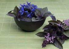 Fresh basil leaves Stock Image