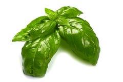 Fresh basil leaves in closeup Stock Photo