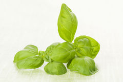 Fresh basil leaves on green background. Royalty Free Stock Images