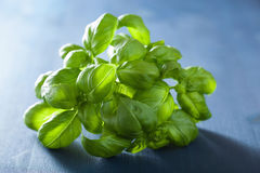 Fresh basil leaves herb over blue background Stock Photos