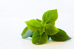 Fresh basil leaves isolated. On white Stock Image