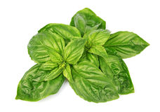 Fresh basil leaves Stock Images