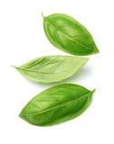 Fresh basil leaves Royalty Free Stock Images