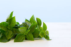 Fresh basil leaves isolated. On white and blue sky Stock Photos