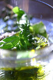Fresh basil leaves in olive oil Royalty Free Stock Image