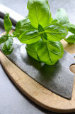 Fresh basil leaves on wooden cutting board Stock Photo