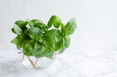 Fresh basil on marble background royalty free stock photo