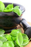 Fresh basil in mortar stock photo