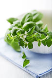 Fresh basil and oregano Royalty Free Stock Photo