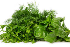 Fresh basil,parsley and dill Royalty Free Stock Image