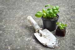 Fresh basil and parsley Royalty Free Stock Photography