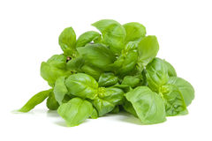Fresh basil plant Royalty Free Stock Image