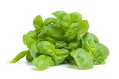 Fresh basil plant royalty free stock image