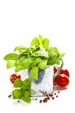 Fresh basil in the pot and italian ingredients Royalty Free Stock Photo