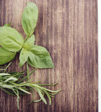 Fresh Basil and Rosemary Stock Image