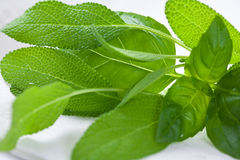 Fresh basil and sage Royalty Free Stock Photos