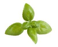 Fresh basil sprig isolated on white Stock Photos