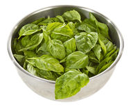 Fresh basil in stainless steel bowl Stock Images