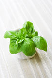 Fresh basil, still life. Fresh basil, on the table covered with cloth. Still life Stock Images