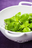 Fresh basil on a table Stock Photo