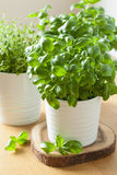 Fresh basil thyme herbs in pots Stock Images