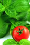 Fresh basil and tomato Royalty Free Stock Images
