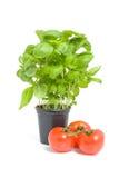 Fresh basil and tomatoes Royalty Free Stock Photos