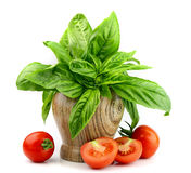Fresh basil with tomatoes Stock Image